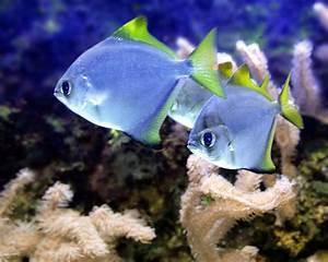 Transportbox Für Fische : ergebnis f r zwei in einem aquarium herum schwimmende fische ~ Michelbontemps.com Haus und Dekorationen