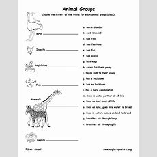 Animal Traits Matching