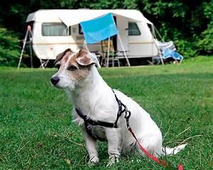 Vermieter Verbietet Hund : spreewald camping l bben mit hund l bben spreewald ~ Lizthompson.info Haus und Dekorationen