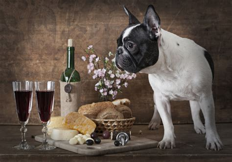 ways  celebrate national dog day dog fashion show