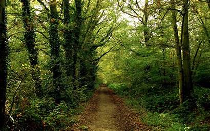 Nature Wallpapers Cool Background Forest Wallpapers9 Path