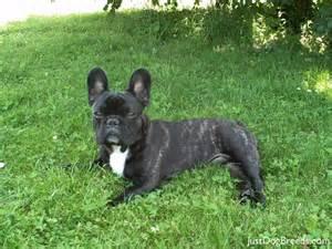 French Dog Breeds
