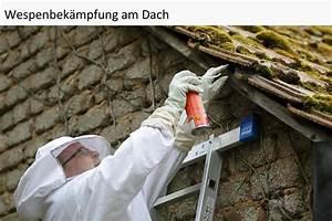 Wespennest Entfernen Vermieter : wespenvernichtung wespen bek mpfen und vertreiben ~ Orissabook.com Haus und Dekorationen