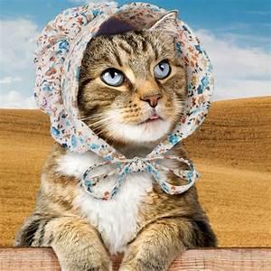 Verkleidung Für Katzen : haube f r katzen gadgets und geschenke ~ Frokenaadalensverden.com Haus und Dekorationen