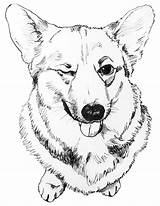 Corgi Coloring Pages sketch template
