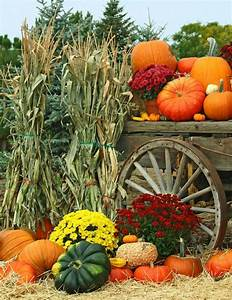 Pin by Stacia Cook on Harvest Time Pinterest