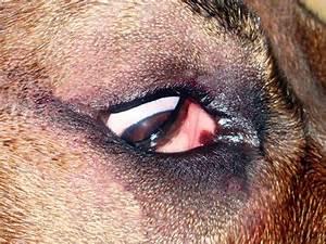 Ветеринария папиллома лечение