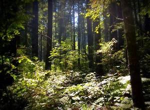 Forest Undergrowth By Autumndragon1172 On Deviantart