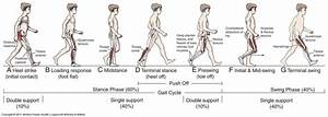 Gait In Prosthetic Rehabilitation