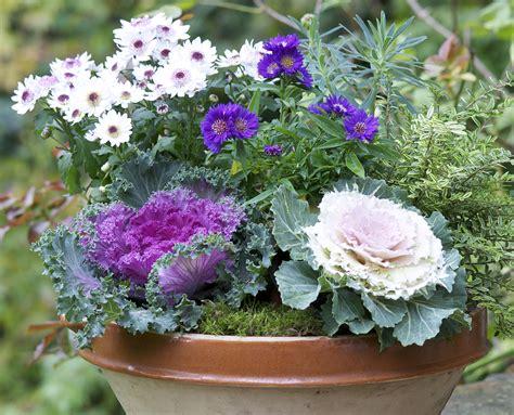 r 233 aliser une pot 233 e de choux d 233 coratifs d 233 tente jardin