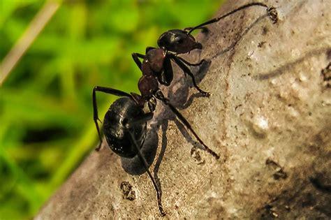 Was Hilft Gegen Ameisen  Die Besten Mittel  Garten Mix