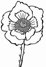 Poppy Coloring Colorare Papavero Disegno Disegni Kleurplaat Printable Klaproos Mohnblume Gratis Kolorowanki Colorat Stampare Poppies Mac Desenat Supercoloring Malvorlagen Kwiat sketch template