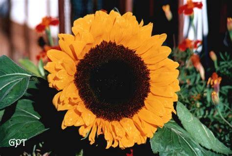 fiori significato e simbologia