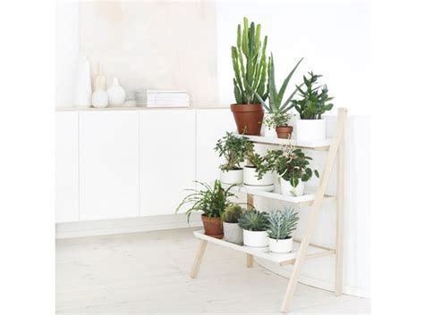 plante cuisine decoration plantes et fleurs 15 idées pour décorer mon intérieur