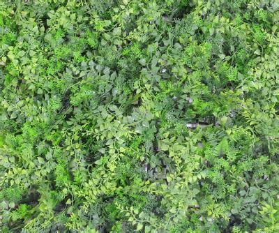 Mur Végétal Artificiel Fougère