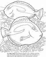 Coloring Fish Barrier Algae Reef Ocean Getcolorings Getdrawings Realistic Tropical Colorings sketch template