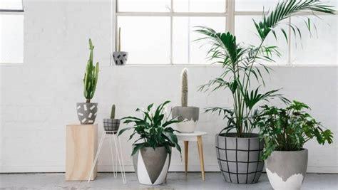 plantas  dentro de casa flores cultura mix