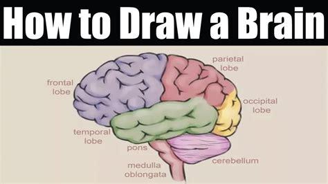 how to ts of brain and its parts neuroanatomy wikipedia