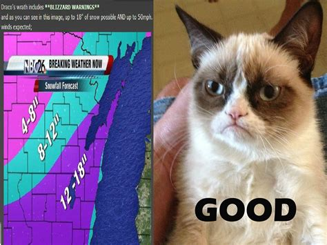 Grumpy Cat Good Meme - good morning grumpy cat meme memes