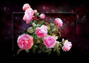 Begleitpflanzen Für Rosen : rosen f r ein sch nes wochenende foto bild pflanzen pilze flechten bl ten ~ Orissabook.com Haus und Dekorationen