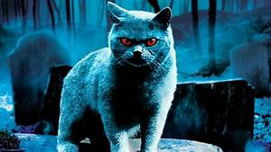 Horror Cats Wallpapers HD Images & Pictures | HD ...