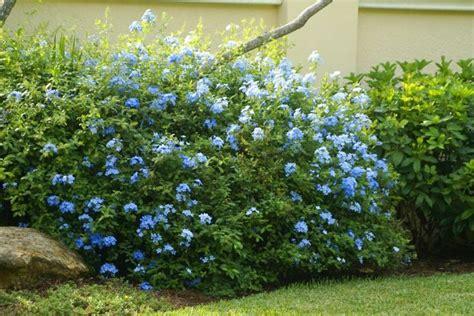 Flowering Shrubs  Michael A Gilkey, Inc On Pinterest