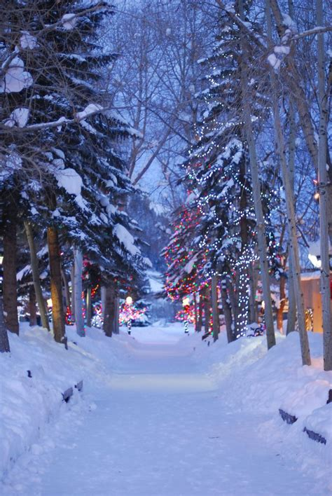 Aspen Colorado Christmas Time Winter Trees Winter
