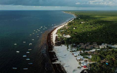 Problema de sargazo continúa en Playa del Carmen, así lo ...