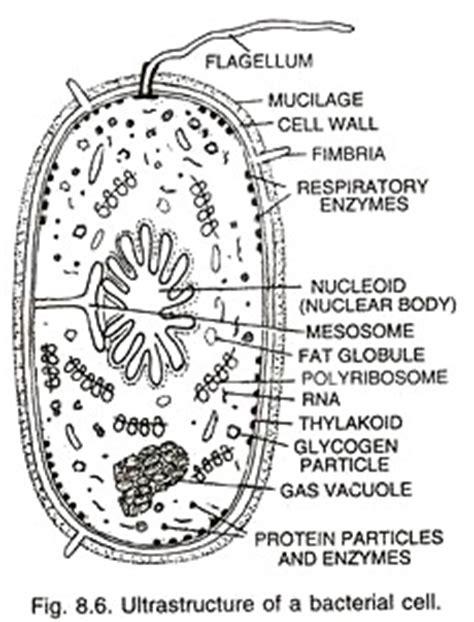 Prokaryotic Cell Main Characteristics With Diagram