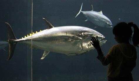 cuisiner le thon image gallery le thon