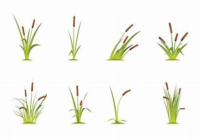 Cattails Vector Clipart Graphics Edit