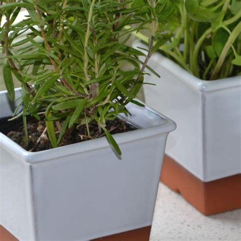 Windowsill Pots For Herbs by Windowsill Herb Pot White Weston Mill Pottery Uk