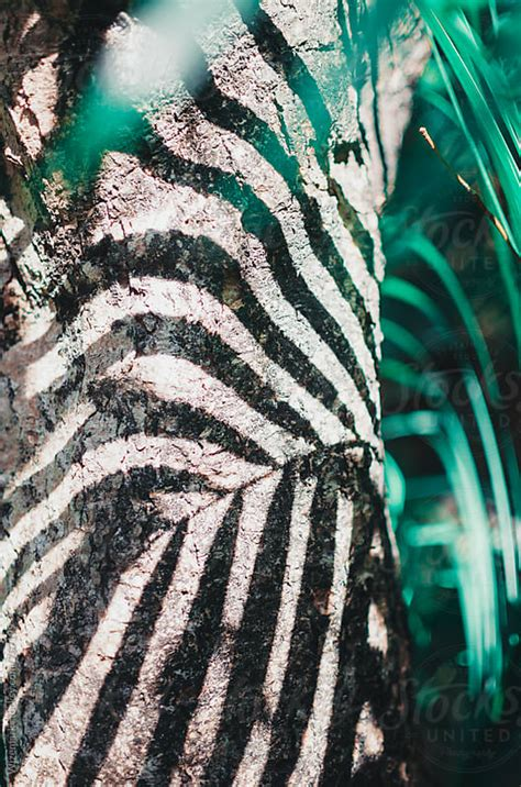 Palm leaf pattern/background shadow on the tree trunk by