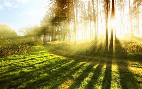 capture  beauty  sunlight xcitefunnet