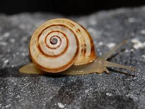 Image Gallery molluscs