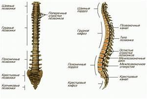 Лекарства от остеохондроза грудного и шейного отдела