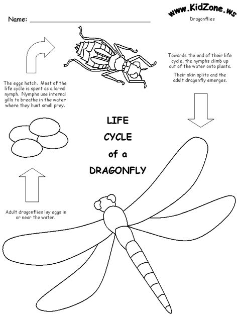 Dragonfly Lifecycle Worksheet  Bug Theme  Pinterest  Life Cycles, Dragonfly Life Cycle And