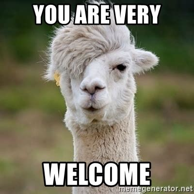 You Are Welcome Meme - you are very welcome hipster llama meme generator