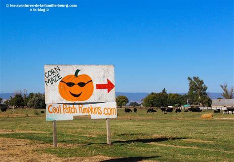 utd netid help desk 8 milk farm dixon pumpkin patch cool patch pumpkins