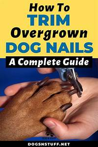 How To Trim Overgrown Dog Nails  A Complete Guide