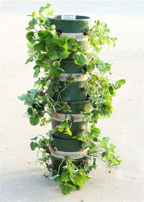 garden tower diy a complete guide how to grow strawberries 2017 and 10