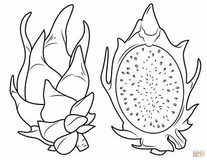 Coloring Fruit Dragon Pages Cross Section Its