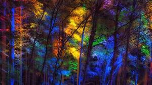 Download, Wallpaper, 3840x2160, Forest, Trees, Colorful