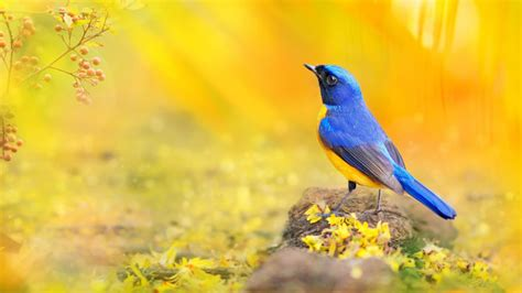 Support us by sharing the content, upvoting wallpapers on the page or sending your own. Blue Yellow Bird Blue Neck Yellow Yellow Stomach Bird Sink 4k Ultra Hd 1610 Desktop Backgrounds ...