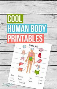 Human Body Printable Worksheets