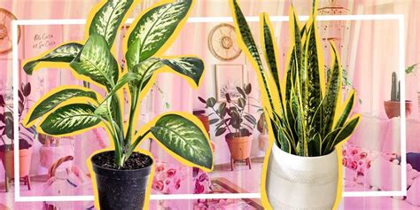 tanaman hias indoor awet ditanam rumah