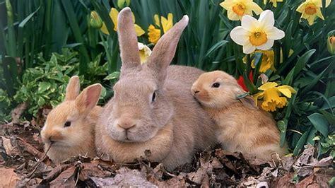 hd wallpaper brown rabbit illustration hare