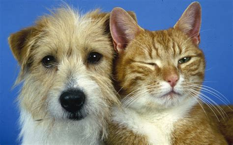 millions  dogs  cats suffering  owners fail  care