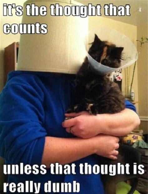 Pet Meme - 10 funny pet memes