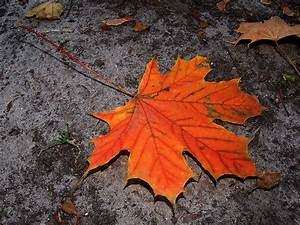 Kostenlose Bilder Herbst : herbst hintergrundbilder kostenlos ~ Yasmunasinghe.com Haus und Dekorationen